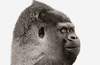 Corning Gorilla Glass 3 is 3 times tougher!