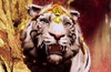 Latest Far Cry 4 trailer gives an in-depth look at game weaponry