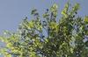 Unreal Engine 4.7 update offers horticultural splendour