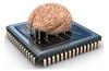 Organic computing device created using four rat brains