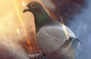 Battlefield 1 includes third person pigeon gameplay