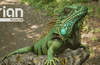"""Imagination Power VR Furian is """"a massive step"""" for mobile GPUs"""