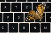Apple apologises over continued butterfly keyboard woes